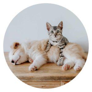 Schmuck für Hunde- & Katzenmamis